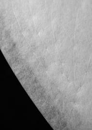 Мъжки раменни вати / Реглан / Артикул 128